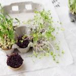 KWEEK JE EIGEN MICRO-GROENTEN | super gezonde garnering voor soep, broodjes of salade